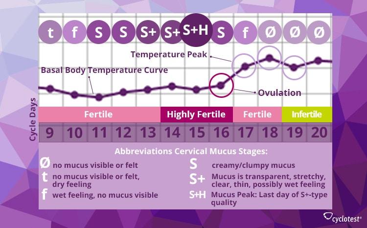 Cervical Mucus Quality Fertile